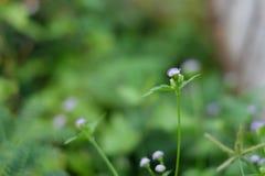 Trawa kwiatu tła zieleni plama Obraz Stock