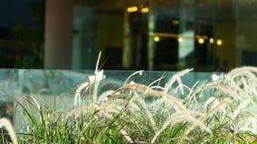 Trawa kwiatu wiązki stwarzają ognisko domowe dekorację Fotografia Stock
