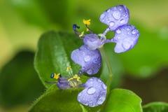 Trawa kwiaty obraz royalty free