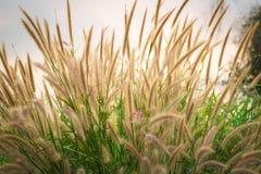 Trawa kwiaty Zdjęcie Stock
