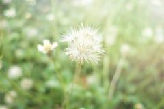 Trawa kwiaty i słońca światło zdjęcie royalty free