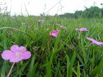 Trawa kwiaty fotografia stock