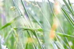 Trawa, kwiaty, naturalny tło, pocztówka, piękny koloru tło zdjęcie royalty free