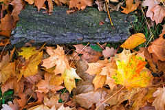 trawa leafs klon Zdjęcia Stock