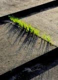 Trawa między betonowymi progami Zdjęcia Royalty Free