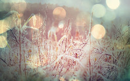trawa mrożone zdjęcie stock