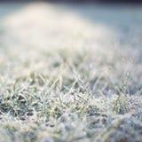 trawa mrożone mroźna ranek natury opadu śniegu zima Obrazy Royalty Free
