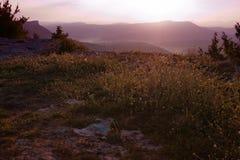 Trawa na górze wzgórza zdjęcia stock