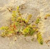 Trawa na piasek plaży w kontekście niebieskie chmury odpowiadają trawy zielone niebo białe wispy natury Obraz Stock