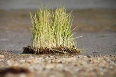 Trawa na plaży Zdjęcie Stock