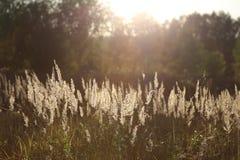 Trawa na pole stojakach w świetle słonecznym obrazy stock