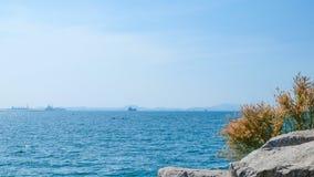 Trawa na skałach morzem Obraz Royalty Free
