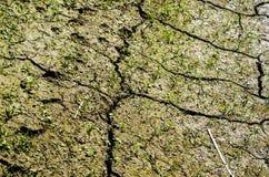 Trawa na suchej ziemi z pęknięciami Zdjęcie Royalty Free