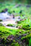 Trawa na zieleni ziemi Obrazy Stock