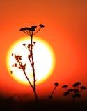 Trawa nad dużym słońca tłem Obrazy Royalty Free