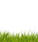 trawa odizolowywająca Obraz Royalty Free
