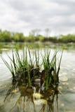 trawa odzwierciedlać jeziora. Obraz Royalty Free