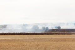 Trawa Ogień Obraz Royalty Free