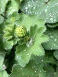 Trawa po deszczu zdjęcia royalty free