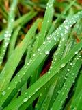 Trawa po deszczu obrazy royalty free