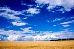 Trawa pole Obrazy Stock