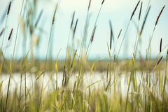 Trawa przy jeziorem Obrazy Stock