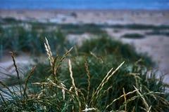 Trawa przy plażą z ostrości - przedpole w ostrości, tło - fotografia royalty free