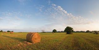 trawa staczająca się Zdjęcie Royalty Free