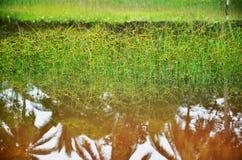 Trawa staw Zdjęcie Royalty Free