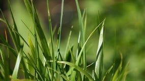 Trawa w duży parkowy jasnozielonym Obraz Stock