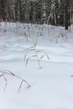 Trawa w śniegu Obraz Stock