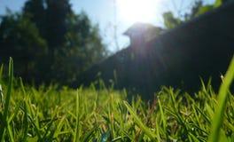 Trawa w ogródzie Zdjęcia Stock