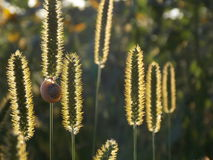 Trawa w słońcu Ślimaczek na trawie Zdjęcia Stock