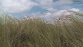 Trawa w wiatrze zbiory wideo