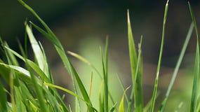 Trawa w zielonym parku Obrazy Royalty Free