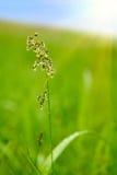 Trawa z rosą w polu obrazy stock