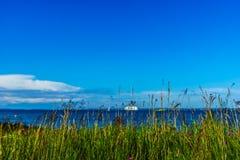 Trawa z widoku morzem bałtyckim Zdjęcie Royalty Free