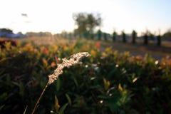 Trawa z wschodem słońca Obrazy Royalty Free