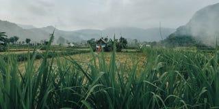 Trawa z zielenią opuszcza, jest bardzo chłodno naturalnie, obraz royalty free