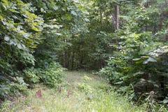 Trawa zakrywająca jezdnia przez lasu obrazy royalty free