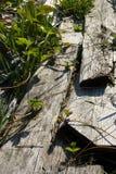 trawa zasadza truskawki Fotografia Stock