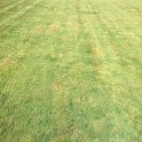 Trawa Zieleń pojedynczy białe tło trawy Naturalna zielonej trawy tekstura, Naturalny zielonej trawy tło dla projekta z kopii prze Fotografia Royalty Free