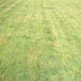 Trawa Zieleń pojedynczy białe tło trawy Naturalna zielonej trawy tekstura, Naturalny zielonej trawy tło dla projekta z kopii prze Zdjęcia Stock