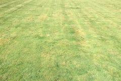 Trawa Zieleń pojedynczy białe tło trawy Naturalna zielonej trawy tekstura, Naturalny zielonej trawy tło dla projekta z kopii prze Obraz Stock