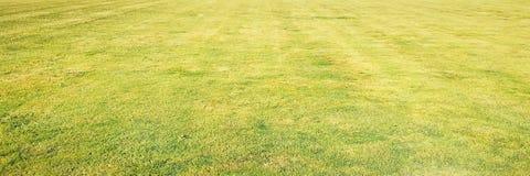 Trawa Zieleń pojedynczy białe tło trawy Naturalna zielonej trawy tekstura, Naturalny zielonej trawy tło dla projekta z kopii prze Zdjęcia Royalty Free
