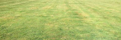 Trawa Zieleń pojedynczy białe tło trawy Naturalna zielonej trawy tekstura, Naturalny zielonej trawy tło dla projekta z kopii prze Obrazy Royalty Free