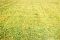 Trawa Zieleń pojedynczy białe tło trawy Naturalna zielonej trawy tekstura, Naturalny zielonej trawy tło dla projekta z kopii prze Obraz Royalty Free