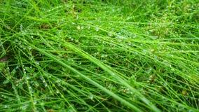 trawa, ziele, krople, zieleń, autumncity Zdjęcie Stock