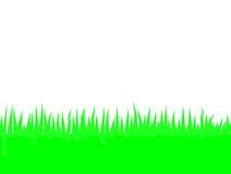 trawa zielona Zdjęcie Stock