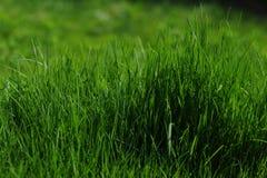 Trawa Zielona jest Obrazy Royalty Free